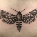 Hawk-moth-tattoo