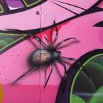 brown-spider