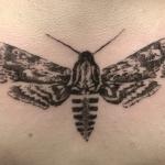 Hawk-moth-tattoo