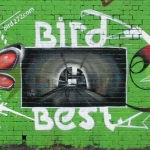 joxe-jam-best-bird